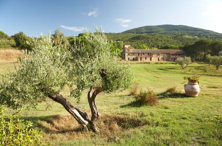 View of a luxury country  in the famous tuscan hills, Italy. In foreground an olive tree.