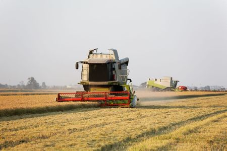 Modern combine harvester in a rice field during harvest time, piemonte, Italy. Stock Photo - 3647272