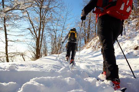 arri�re-pays: Un groupe de skieurs marche arri�re dans une for�t mnowy, Alpes italiennes, europe.