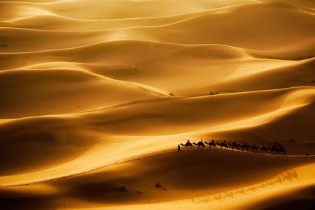 erg: Camel caravan going through the sand dunes in the Sahara Desert, Erg Chebbi, Maroc. Stock Photo