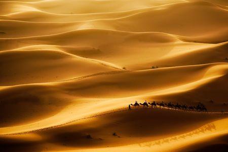 Caravane de chameaux en passant par les dunes de sable dans le désert du Sahara, Erg Chebbi, Maroc.