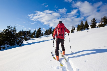 black ski pants: Young male backcountry skier moving up in a snowy woods of pine. Stock Photo