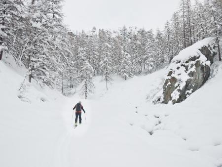 aosta: Backcountry skier walks in a snowy mountain valley  Gressoney, Val d