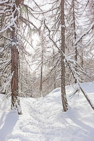 copyspace: Magic winter scenery with snowy pine forest in a sunny day. Vertical orientation with copy-space at the bottom. Great cover book. Stock Photo