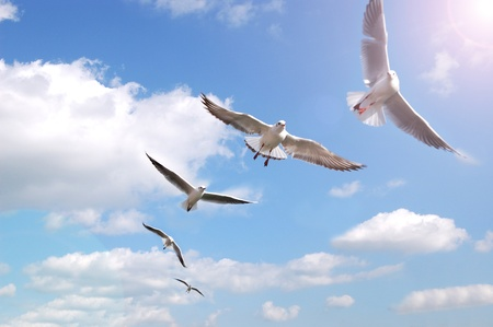 Group of flying birds with blue sky and clouds background