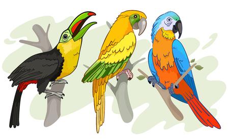 tropical birds: Tropical Birds vector Illustration