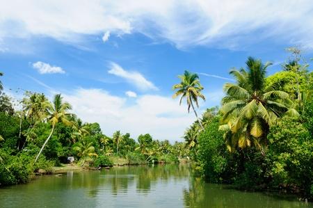 kerala backwaters: Coco trees reflection  at back waters of Kerala, India