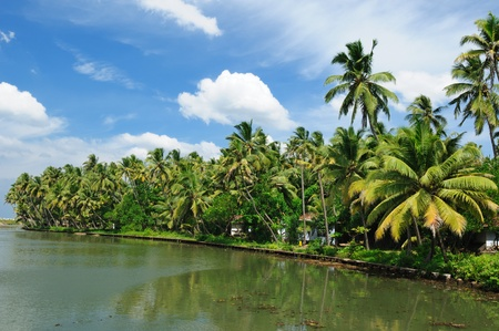 Coco trees reflection at back waters of Kerala, India Stock Photo - 11808626