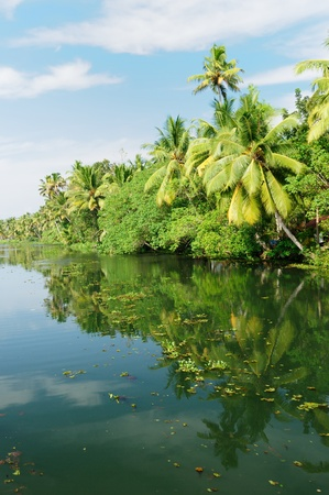 alleppey: Coco trees reflection at back waters of Kerala, India