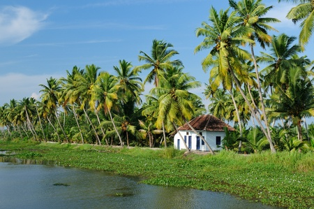 Coco trees reflection and house at back waters of Kerala, India Stock Photo