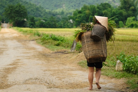 Vietnam - rural scene on the village Stock Photo