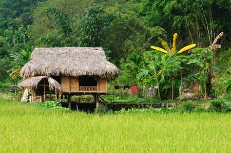 Vietnam - rural scene on the village Standard-Bild