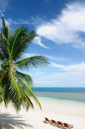 Tropical beach with coconut palm and realxation chairs, Ko Pha-Ngan, Thailand photo
