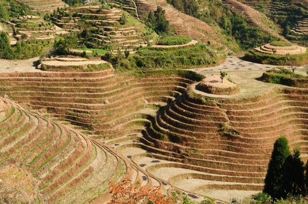 gradas: Dragones Terrazas de Arroz - Backbone antiguas terrazas de arroz hermosas de Longsheng Guilin cercano, provincia de Guanxi, China