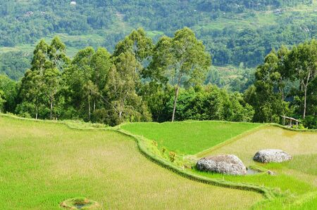 sulawesi: Indonesia - green rice terraces in Tana Toraja, South Sulawesi