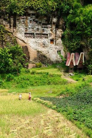 toraja: Tana Toraja - Londa