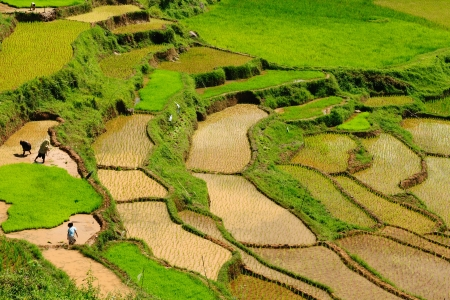 sulawesi: Indonesia - green rice terraces in Tana Toraja, South Sulawesi