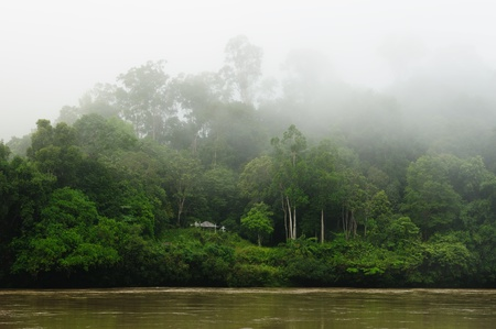 borneo: Scenic view of wild tropical jungle on the Kayan river, East Kalimantan, Indonesia Borneo.