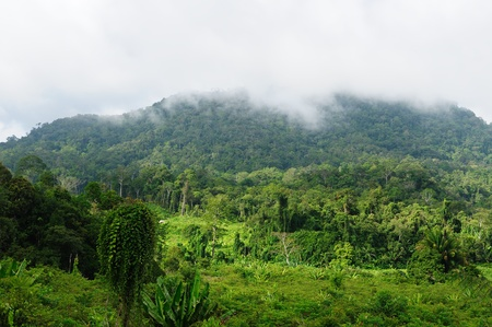 indonesia people: Scenic view of wild tropical jungle near the Mahak river, Malinau province , East Kalimantan, Indonesia Borneo.