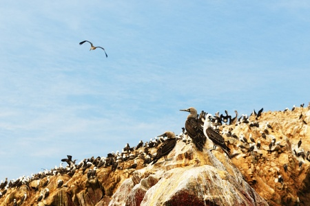 Peru, Sxouth Coast, Islas Ballestas near Paracas National Park, although grandiosely nickname the  poor mans Galapagos  On the island is rich wildlife  booby, pelican, penguins, dolphins, cormorants photo
