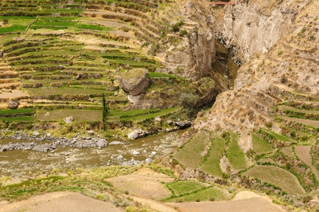 Peru, Colca canyon  the secend wolds deepest canyon at 3191m  The canyon is set among high volcanoes and ranges from  1000m to 3000m where life the Condor  Terraces fields photo