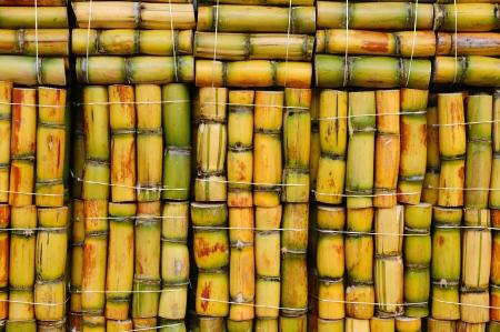 amerique du sud: Packs de canne � sucre pr�tes � la vente, Am�rique du Sud