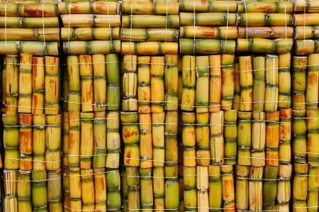 Packs of sugar cane ready to sale, South America  photo