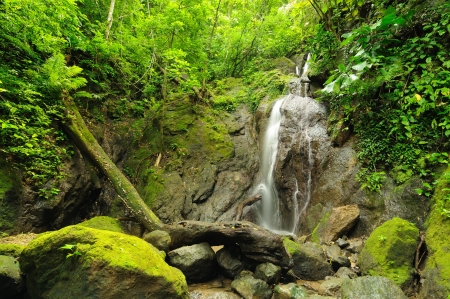 Colombia, wild Darien jungle of the Caribbean sea near Capurgana resort and Panama border  Central America  Waterfall in jungle