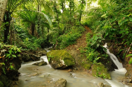 River in the wild Darien jungle near Colombia and Panama border  Central America   Stock Photo - 17032463