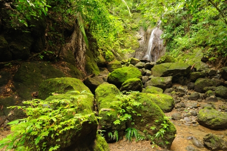 Colombia, wild Darien jungle of the Caribbean sea near Capurgana resort and Panama border  Central America  Waterfall into the jungle Stock Photo