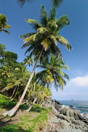 Colombia, wild coast of the Caribbean sea near Capurgana resort where the Darien jungle is encountering the beach Stock Photo - 17201122
