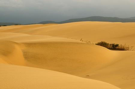 venezuela: Venezuela, magnificent sand dunes can be over 30 meters tall of the  Medanos De Coro National Park near the city of Coro   Stock Photo