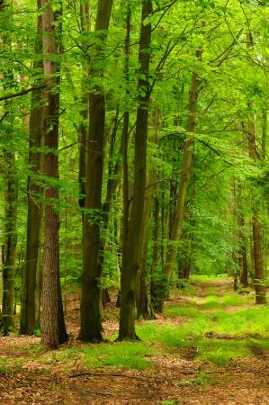 treed: Autumn forest, oak avenue, road Stock Photo