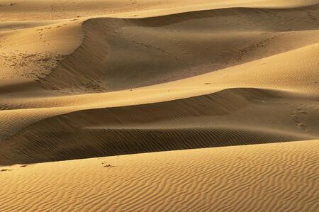 thar: Sand dunes on the Thar desert in India, Rajasthan