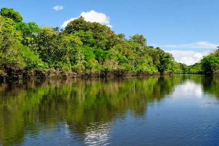 Amazonas landschap. De foto huidige Amazone rivier, Brazilië