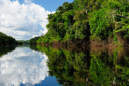 Amazonas landschap De foto huidige Amazone rivier, Brazilië
