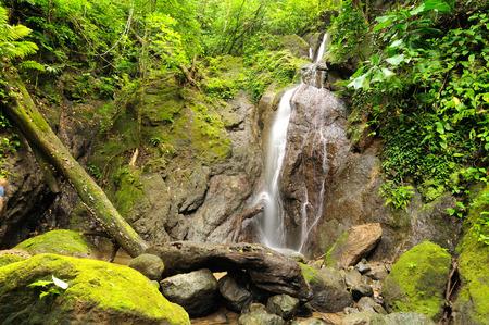 Wild Darien jungle near Colombia and Panama border  Central America   photo