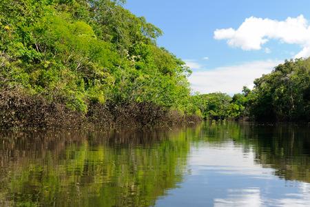 Colombia, Amazonas landscape  The photo present  Amazon river