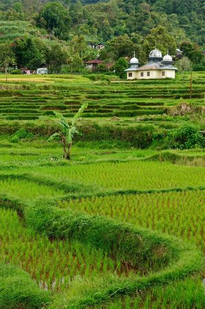 sumatra: Indonesia countryside on the West Sumatra island near Bukittinggi city resort