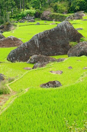 sulawesi: Green rice terraces in Tana Toraja, South Sulawesi, Indonesia Stock Photo
