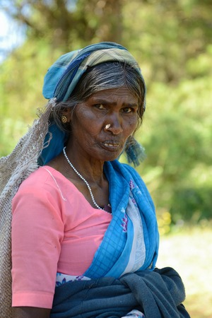 agriculture sri lanka: NUWARA ELIA, SRI LANKA - FEBRUARY 20: Ethnic working woman at the harvest of the tea in the Sri Lanka hill country. Nuwara Eliya on February 20, 2015