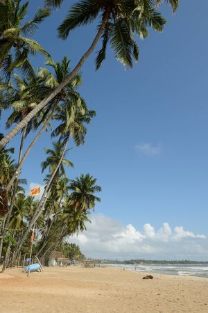 tangalle: White sand and coconut palms on the beach in Tangalle on Sri Lances