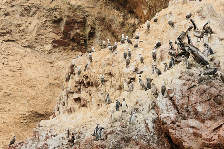 islas: South America, Peru, Sxouth Coast, Islas Ballestas near Paracas National Park, although grandiosely nickname the poor mans Galapagos On the island is rich wildlife: booby, pelican, penguins, dolphins, cormorants