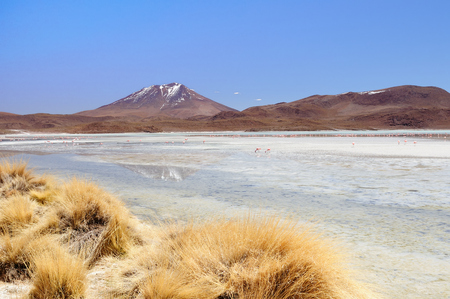 avaroa: South America - The surreal landscape in the Eduardo Avaroa National Reserve of Andean Fauna near Chilean border. The picture present Laguna Hedionda