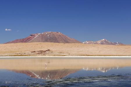 avaroa: South America - The surreal landscape in the Eduardo Avaroa National Reserve of Andean Fauna near Chilean border. Lagoon Canapa