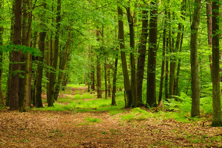 treed: Summer forest in Europe Stock Photo