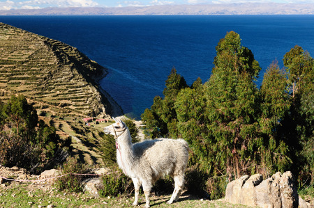 Bolivia - Isla del Sol on the Titicaca lake, the largest highaltitude lake in the world (3808m) This islands legendary Inca creation site and the birthplace of the sun. Landscape of the Titicaca lake Stock Photo
