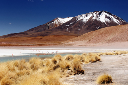 avaroa: Bolivia - the most beautifull Andes in South America. The surreal landscape is nearly treeless, punctuated by gentle hills and volcanoes near Chilean border. The picture present laguna Hedionda