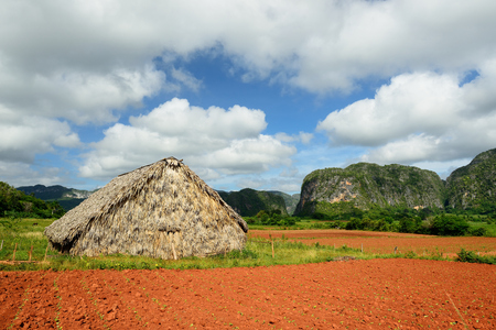 best shelter: Shelter for the drying of tobacco leaves from which next the best cigars are being made in the world. Valle de Vinales, Cuba, Pinar del Rio province
