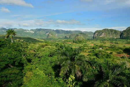 pinar: Valle de Vinales, Cuba, Pinar del Rio province